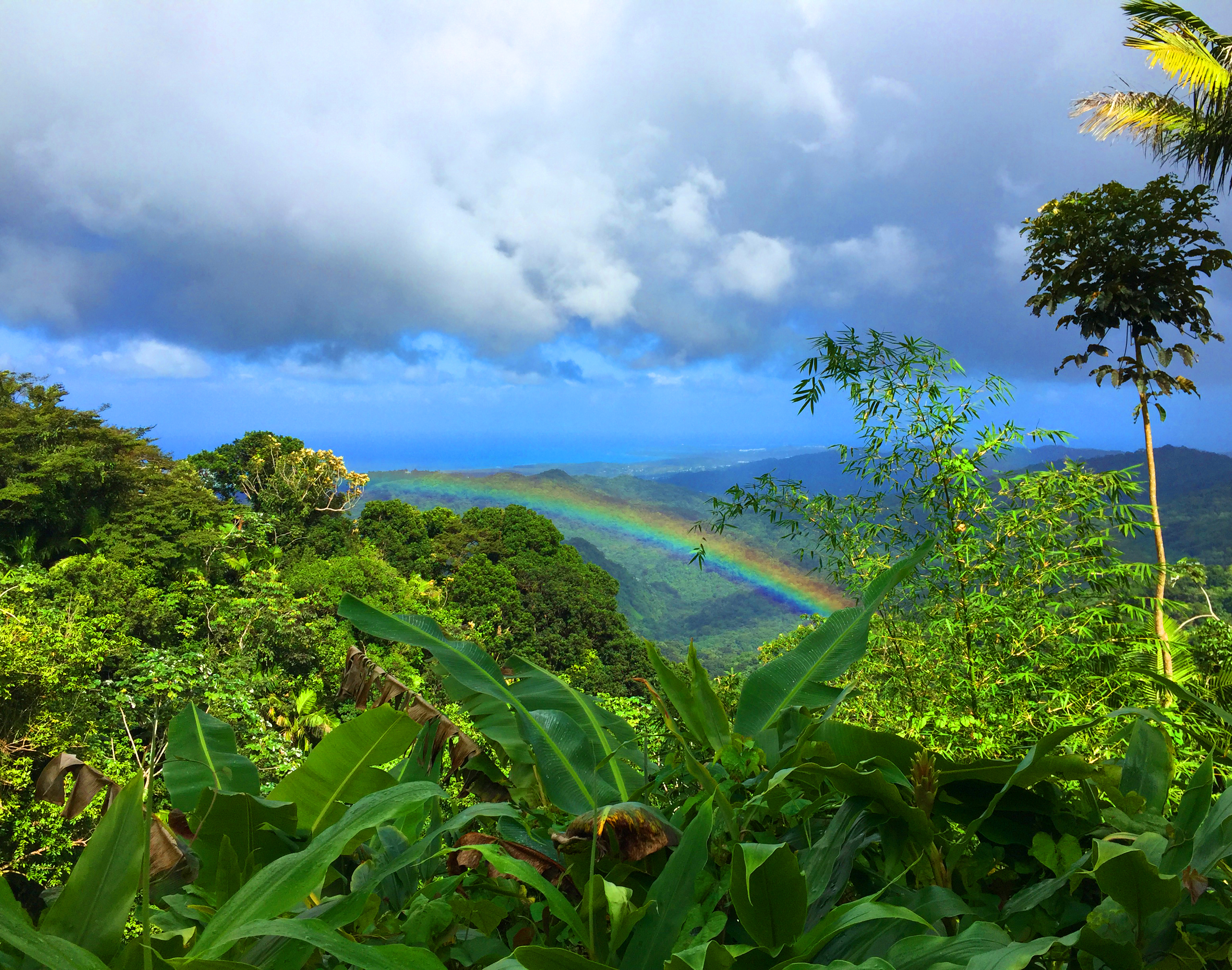 rainbow-original300dpi rainforest Puerto rico photography