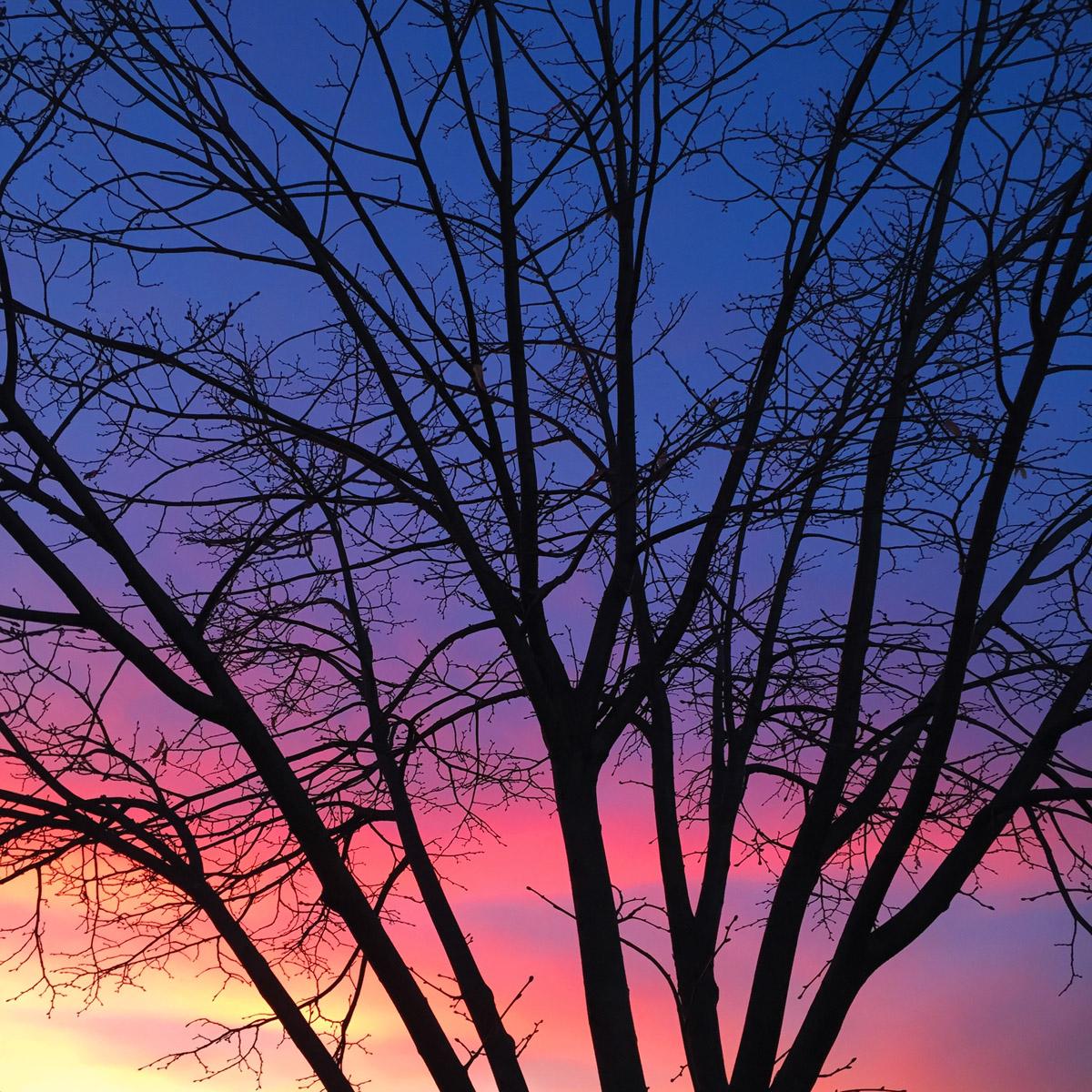 rainbow tree photography