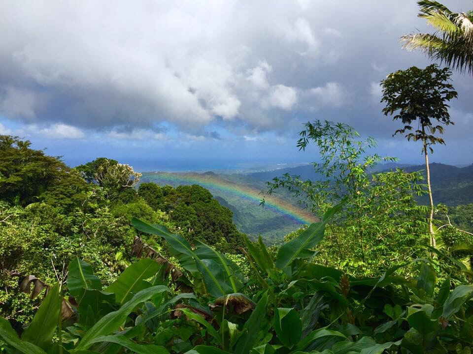 Rainforest and rainbow